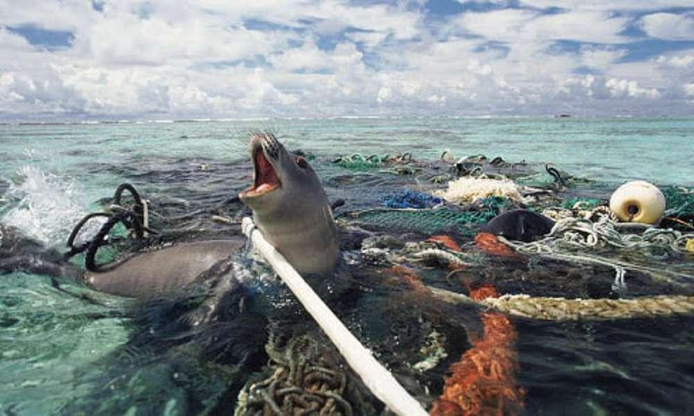 Animais em apuros no lixo da praia: o que fazer?