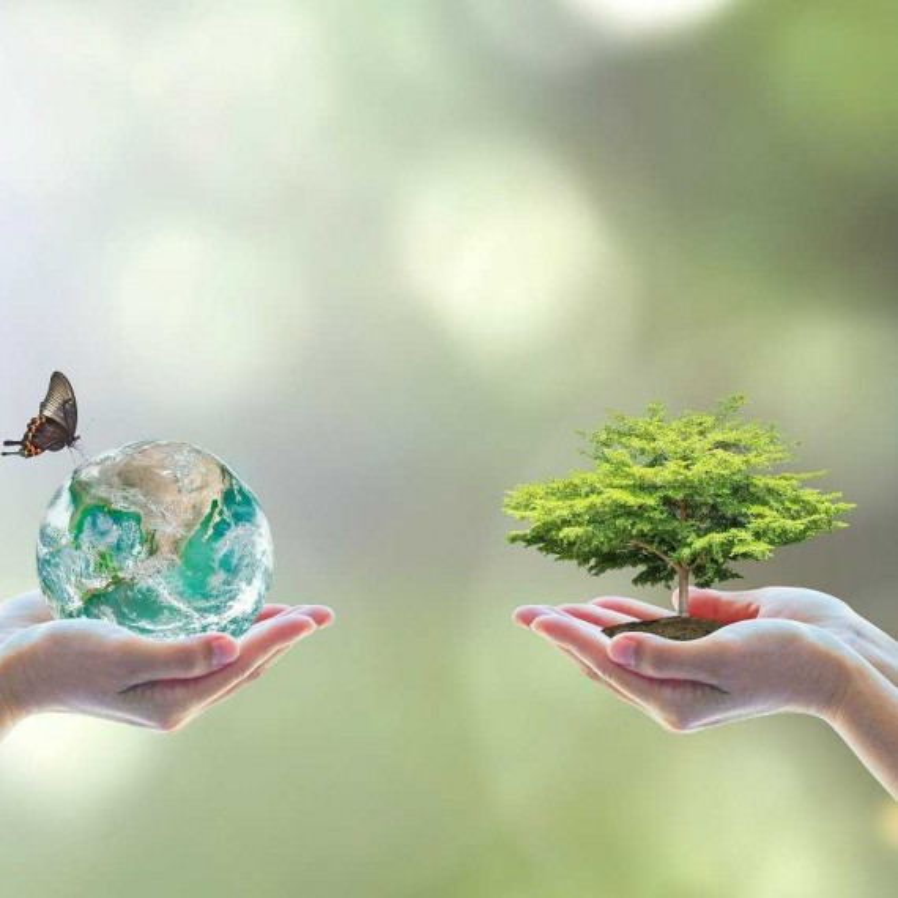 Maneiras de preservar o meio ambiente: 5 dicas que você precisa conhecer