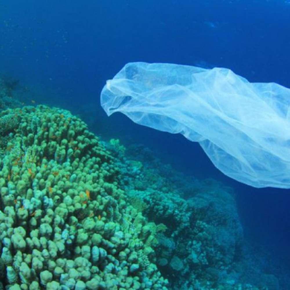 Preservação dos oceanos: entenda sua importância