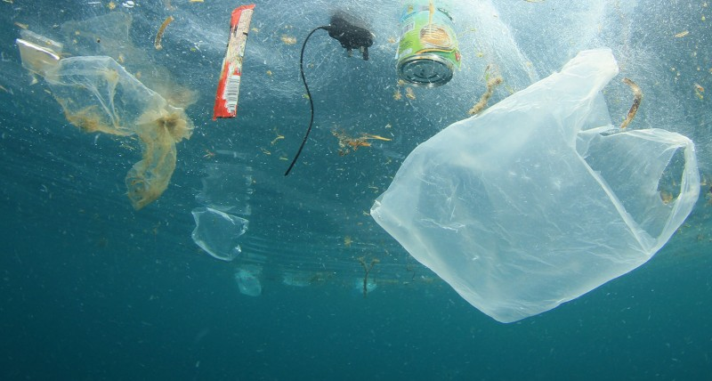 O que você poderia fazer para contribuir com a conservação dos oceanos