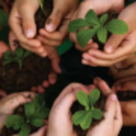Responsabilidade socioambiental: por que é importante?
