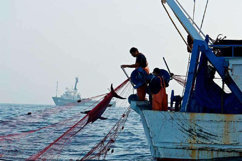 Como a pesca excessiva pode prejudicar o meio ambiente?