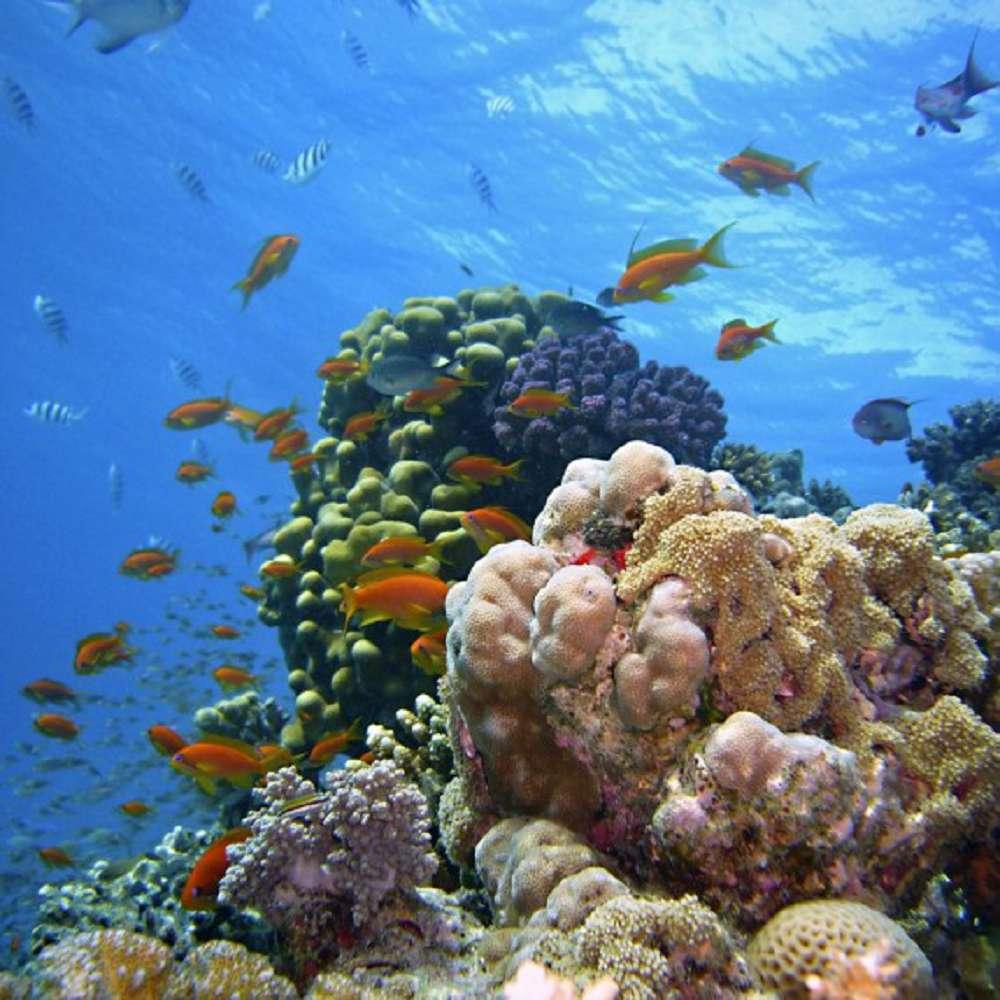 Saiba por que devemos preservar o recife de coral