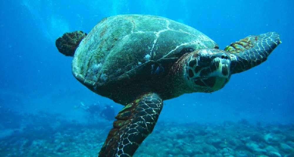 Animais marinhos ameaçados de extinção: conheça as espécies em perigo