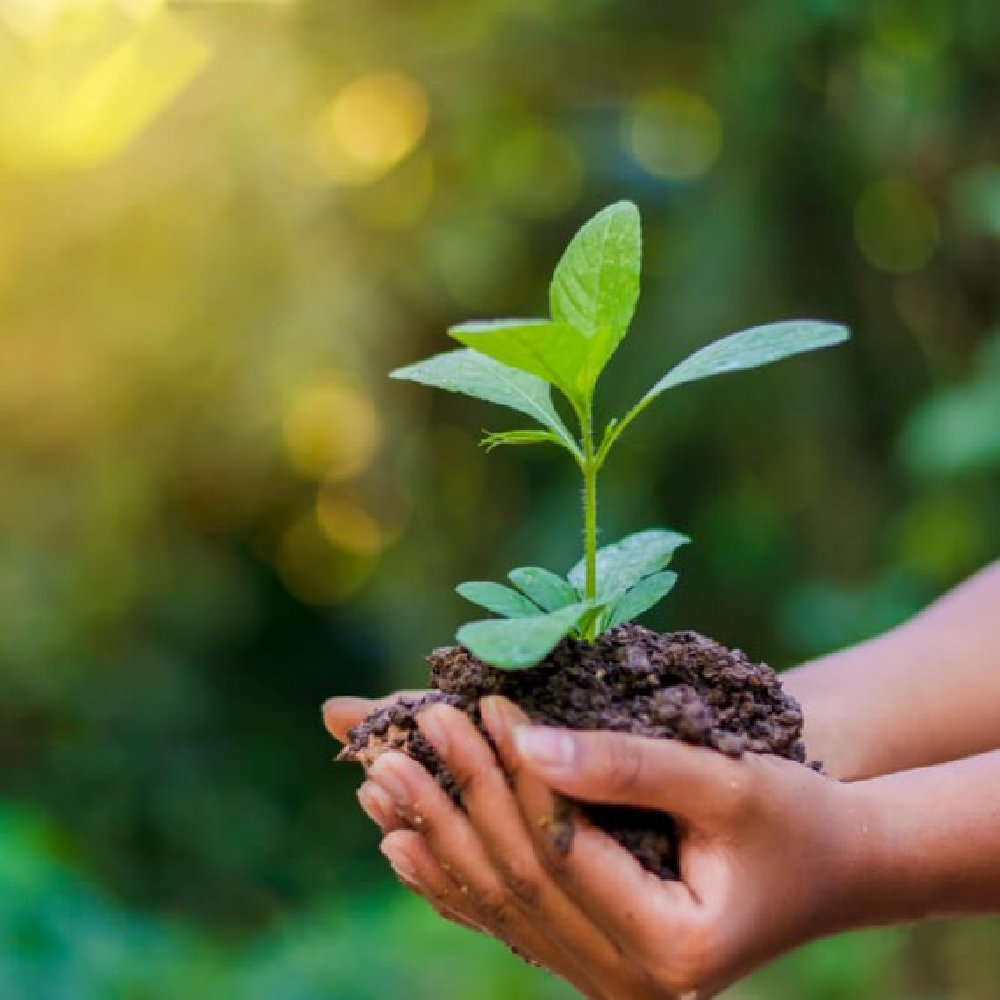 A importância da conscientização ambiental