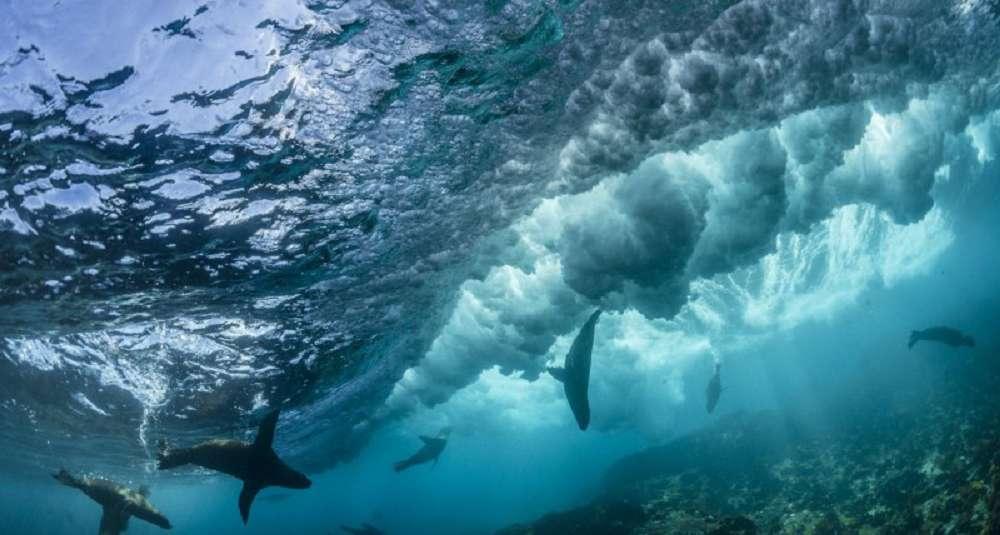 Curiosidades sobre os oceanos que você provavelmente não sabia