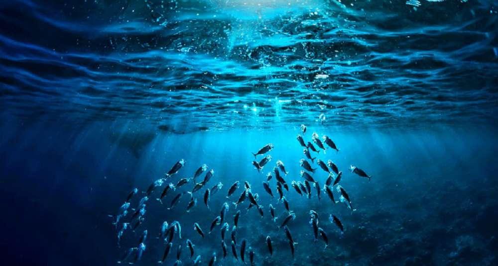 Qual a importância dos oceanos para os seres humanos?