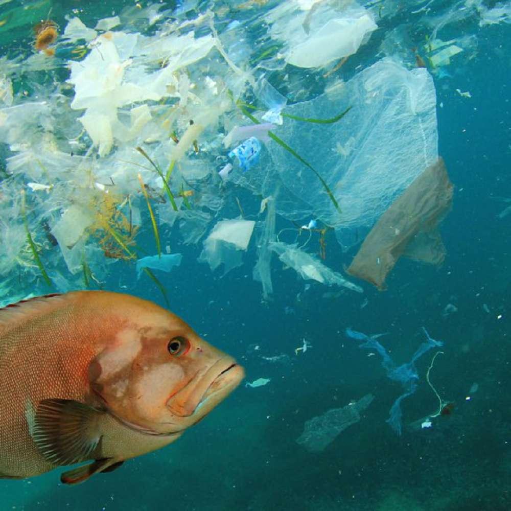 Conheça os principais problemas ambientais nos mares e oceanos