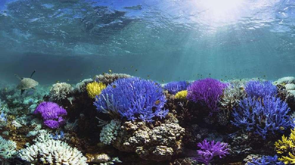 Como o petróleo impacta os recifes de corais?