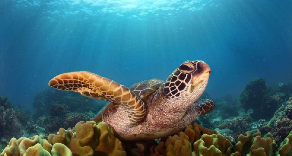 salvar os animais marinhos