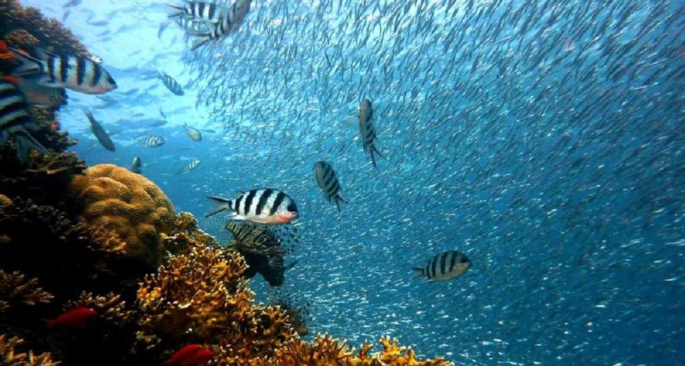 O caminho para a proteção dos oceanos: a criação dos Santuários Oceânicos