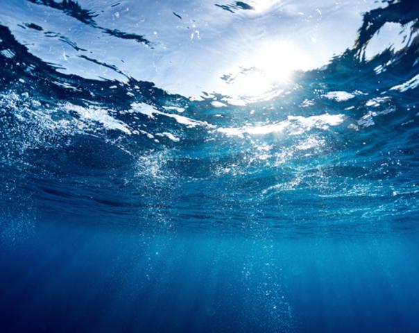 Proteção do oceano: a importância para o clima, a pesca e a biodiversidade