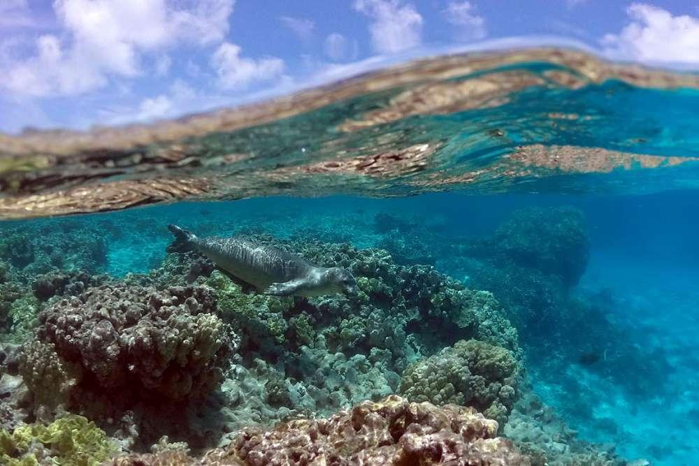 Áreas prioritárias para conservação dos oceanos e a importância do seu mapeamento