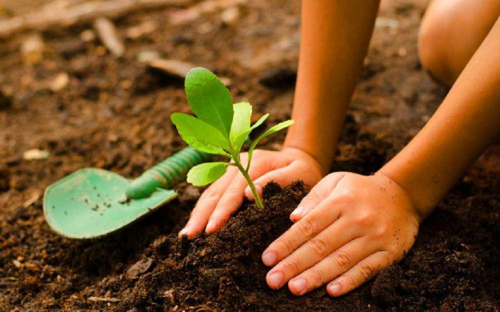 Saiba por que plantar árvores pode ser o caminho para salvar o planeta