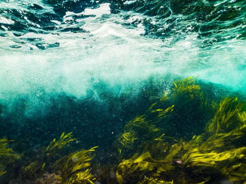 Aquecimento dos oceanos: entenda o desaparecimento das algas marinhas