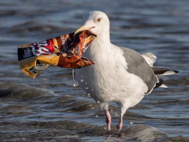 Plásticos nos oceanos: consequências