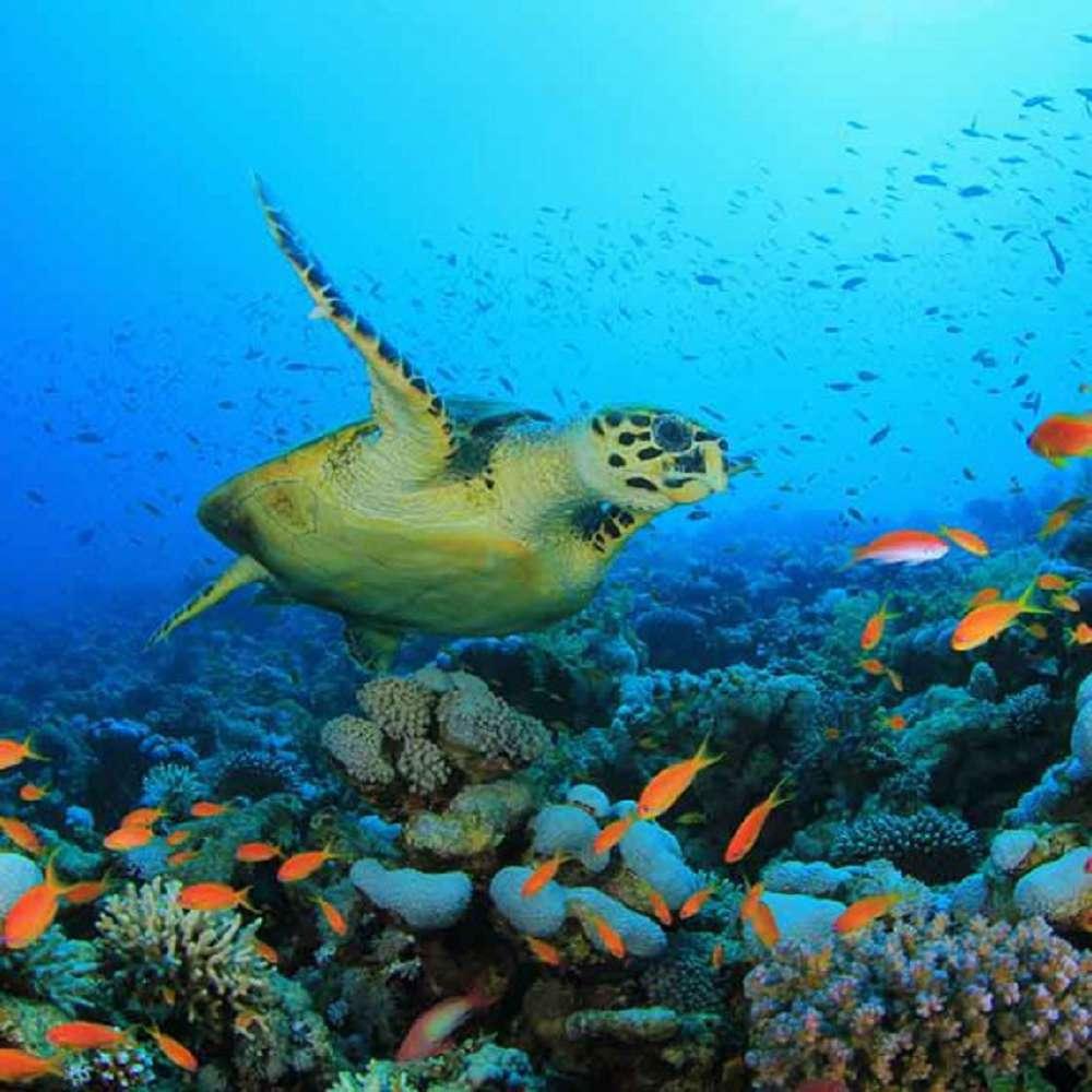 Saiba o que é o Tratado Global dos Oceanos e sua importância