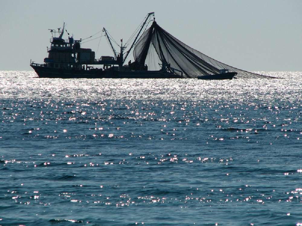 Por que a pesca predatória é a maior ameaça ao planeta?