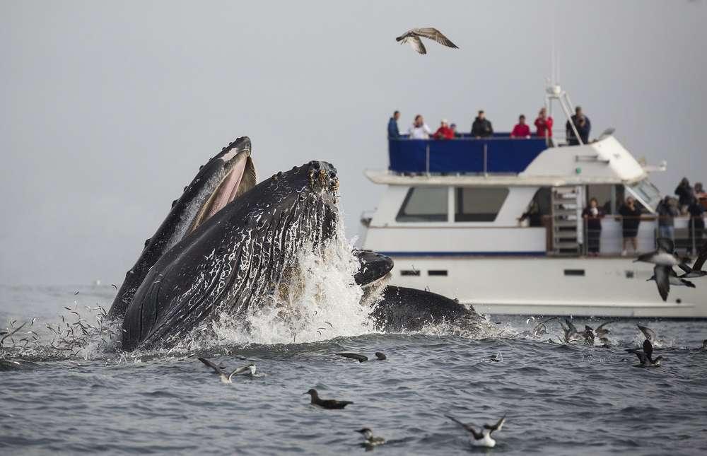 Aumento de ruído nos oceanos: conheça as causas e consequências