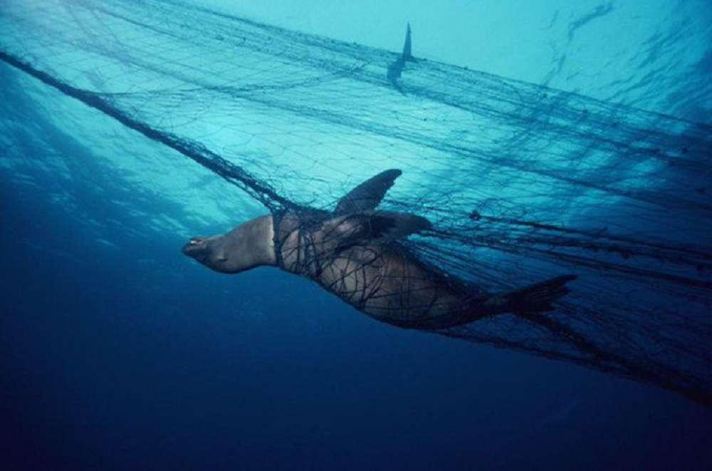"""Entenda mais sobre o problema da """"captura acidental"""" nos oceanos"""