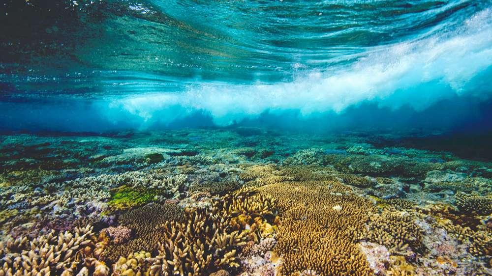 O colapso dos oceanos pode acabar com o planeta em 25 anos: O colapso dos oceanos pode acabar com o planeta em 25 anos: entenda o porquêentenda o porquê