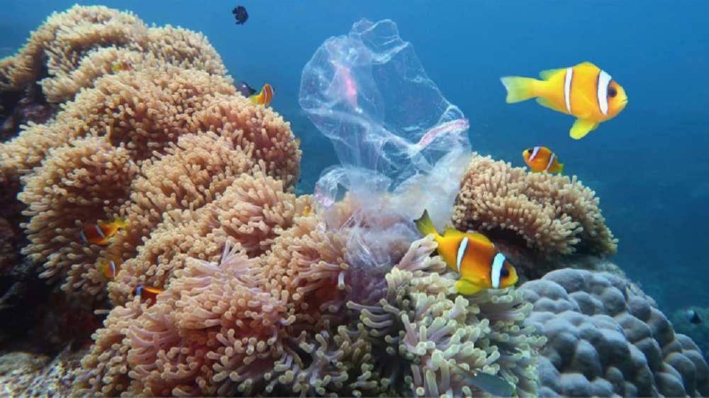 Oceanos aguentam até quando?