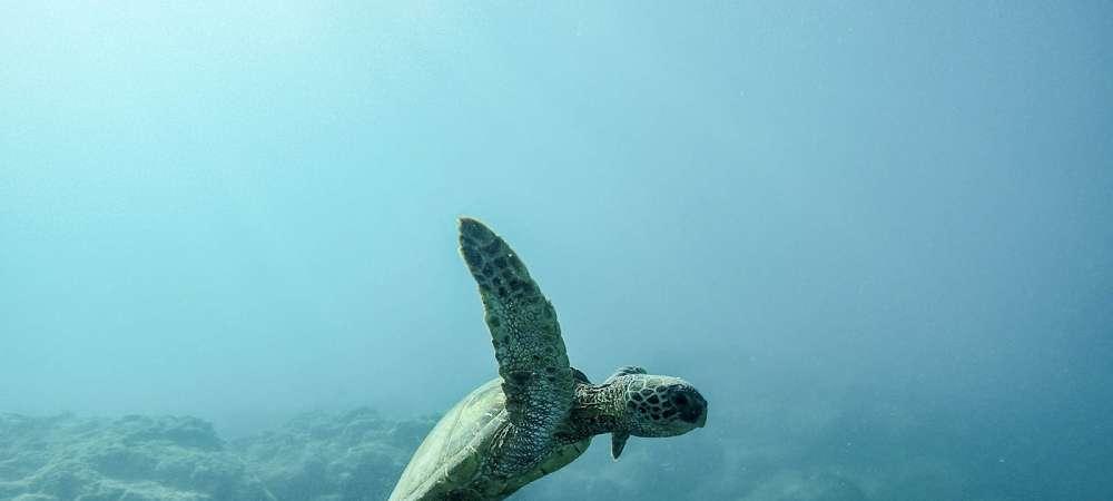 Dia Mundial dos Oceanos: uma data mais que simbólica