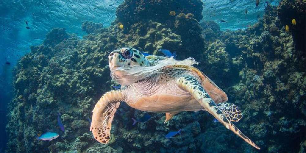 organizações que lutam pela preservação dos oceanos