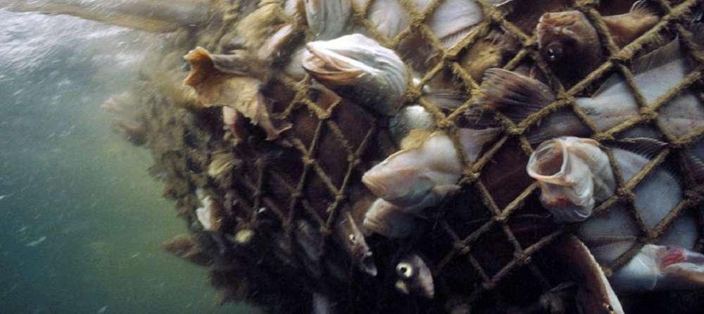 Organizações pedem para que consumidores não comam peixes