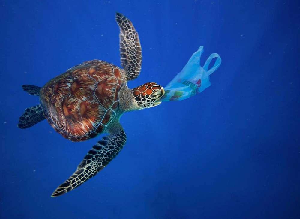 Plástico é encontrado dentro de tartarugas filhotes na Austrália