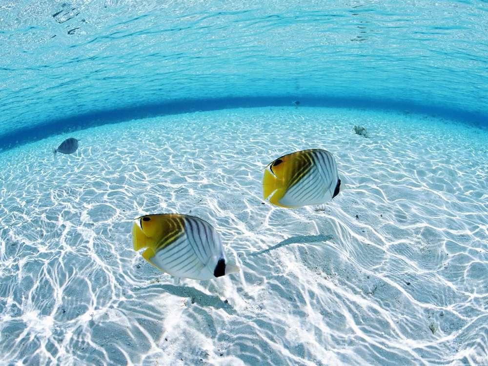 Motivos para os peixes buscarem águas mais rasas